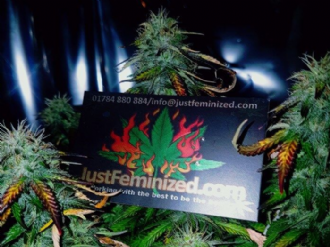 Organic Auto Amnesia Just Feminized Competition Entry Winners 2018